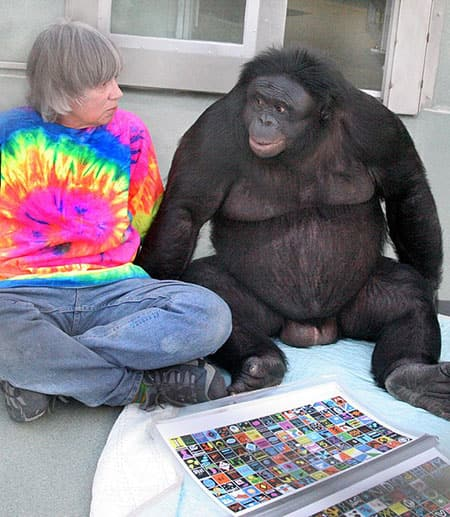 Sue Savage-Rumbaugh sitting with a bonobo and a sheet of lexigrams