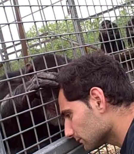 Itai Roffman leans his head against a cage as Fergus, a chimpanzee, touches his face through the bars